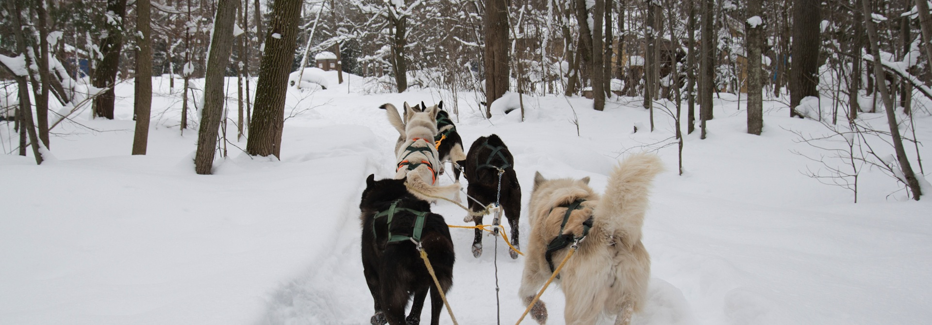 Blog Windrift Adventures Barrie Ontario Dog Sledding