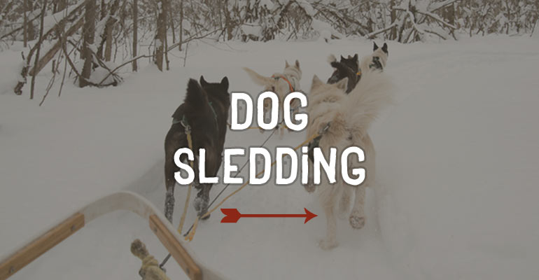 Windrift Adventures Barrie Ontario Dog Sledding